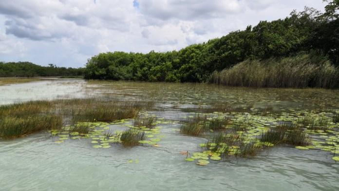 Algas en la Laguna de Bacalar