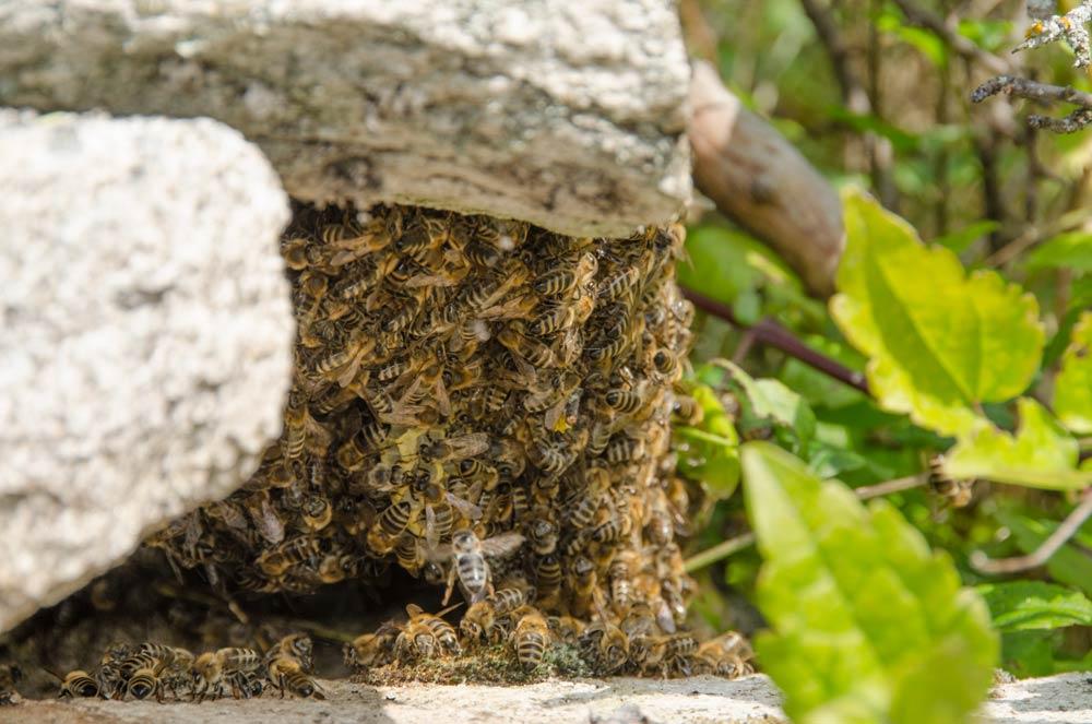 Beekeeping in Mariovo