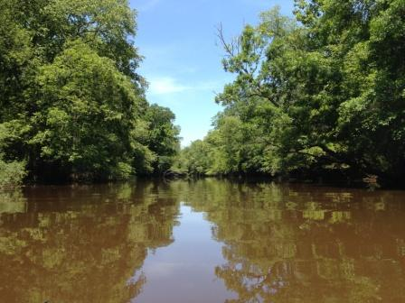 Ogeechee River upstream, our family farm is on the left bank