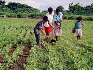 agricultura-familiar-1-300x225