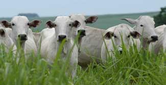 carne-bovina-Abre[1]