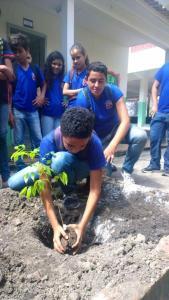 Mudas de Ipê e Pau Preto foram plantadas na área da escola estadual (Foto: Arquivo Secult/PA)