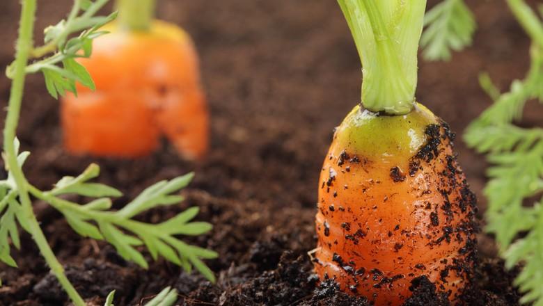 A agricultura orgânica no Brasil tem um grande caminho a percorrer: menos de 1% da área agricultável do país é utilizado para o plantio agroecológico (Foto: USDA/CCommons)
