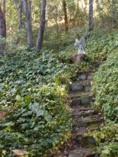 Stairway to the Moon, Redwood Valley by Clare Vanacore