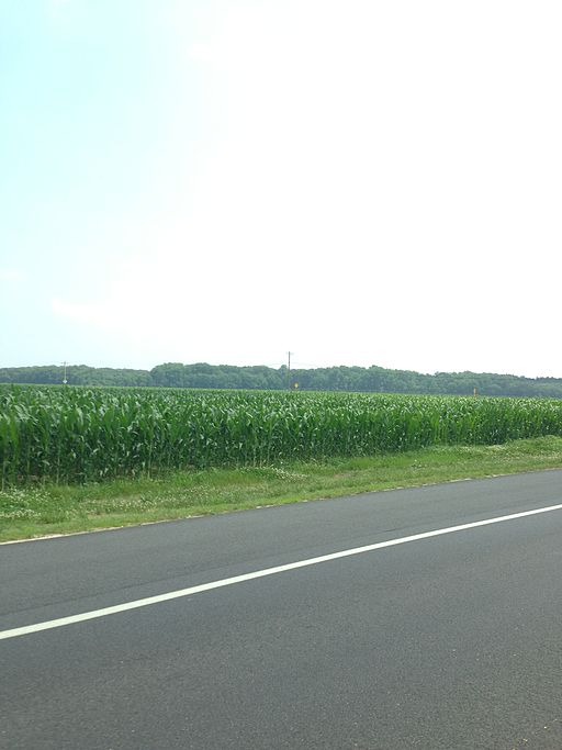 Corn_in_Lewes