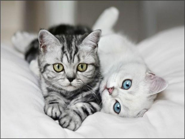 Ученые коты обладают целительными свойствами