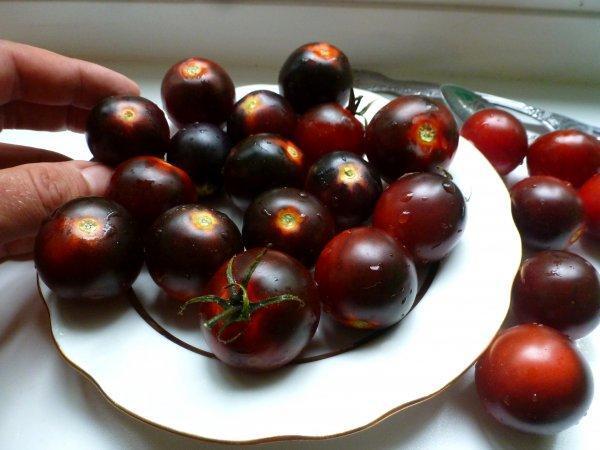 Помидоры черри на подоконнике. Как вырастить помидоры на подоконнике в горшке? Выращивание помидоров черри в открытом грунте