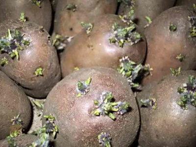 Свой бизнес выращивание картофеля