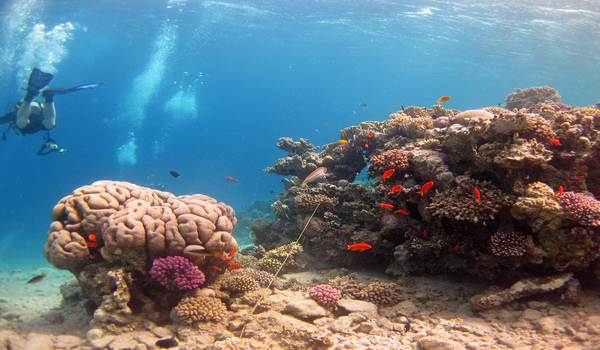 Explore coral reefs when diving Dahab