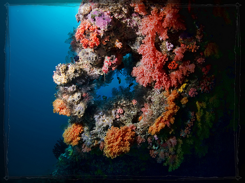 See_corals_when_on_a_dive_trip