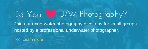 discover our underwater photo dive trips