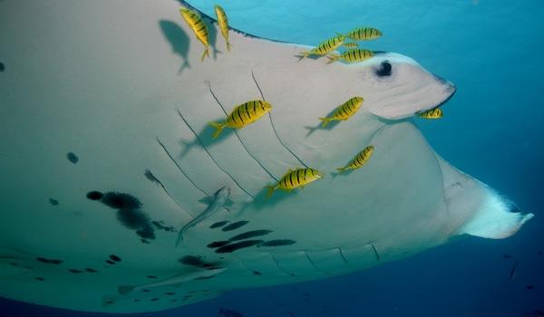 Big Marine Life