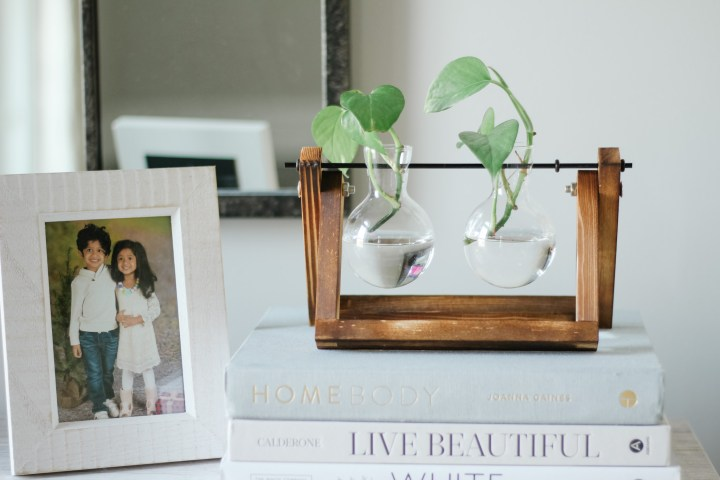 3 Easy Steps to Propagate a Pothos Plant