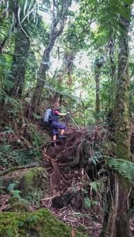 Root Climb