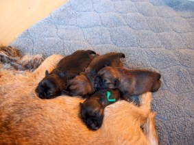INDY AND BANKS PUPPIES