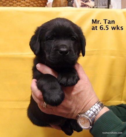 Navy Colten Pup