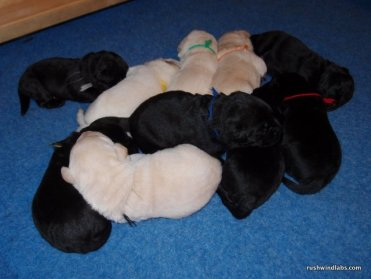A Pile of Beautiful Babies