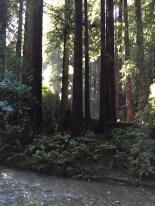 Light breaks through, Muir Woods