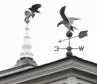 A crow takes fllight from the top of a cupola at the Fortin Group/Auburn funeral home on Turner Street in Auburn Thursday afternoon.