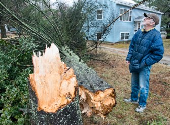 Randy Burgess looks up at the damage to trees, including a prize black walnut, that were damaged when this pine came crashing down next to his house at the top of Goff Hill in Auburn Thursday. His mother Virgina planted the tree over 40 years ago. Burgess and his mom were watching TV when they heard the crack and crash. When they looked out, the noticed that it missed his new vehicle by inches as it came down parallel to the driveway at 467 Court Street.