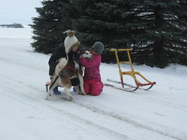 Pine Ridge Siberians