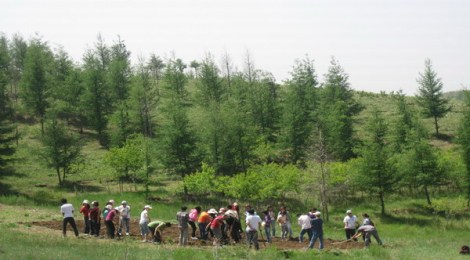 Chinese Volunteers Have Planted 64 Billion Trees