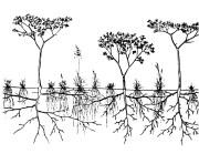 Shallow versus deep roots
