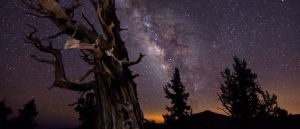Oldest Living Trees On Earth - The Bristlecone Pines