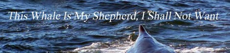 The Whale Is My Shepherd, I Shall Not Want