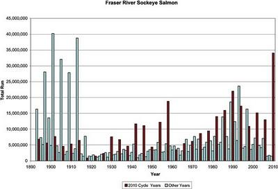 Fraser River Sockeye