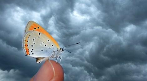 Plankton Butterfly Effect Helps Make Rain