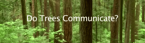 trees communicate