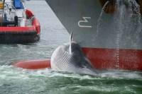 whale ship bow