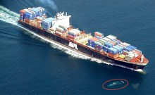 whale ship near miss