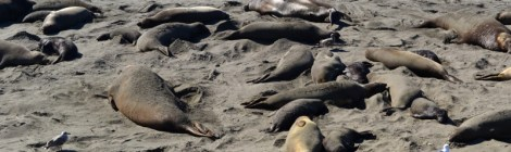 sealion nursery