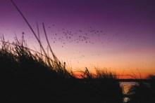 desert_ducks_dawn1