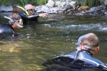 Swimming_rivers_salmon1