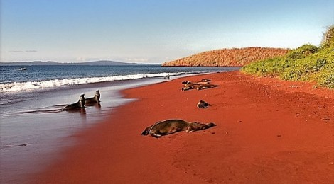 red sand beachs fight global bluing