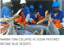 namibia tuna collapse