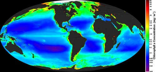 Global_ocean_chlorophyl2016
