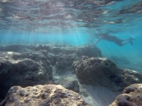 corals can be saved, even these seemingly dead ones