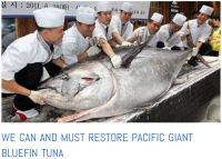 tuna pastures collapse bluefin in danger