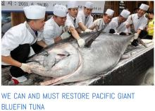 natural capital tuna