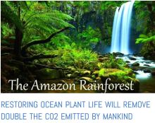 Amazon decline - plankton cools the planet