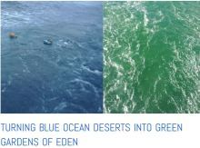 ocean plankton pastures turn from blue to green