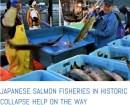 salmon crisis