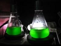 lab culture flasks