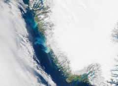 Greenland ice feeds ocean pastures