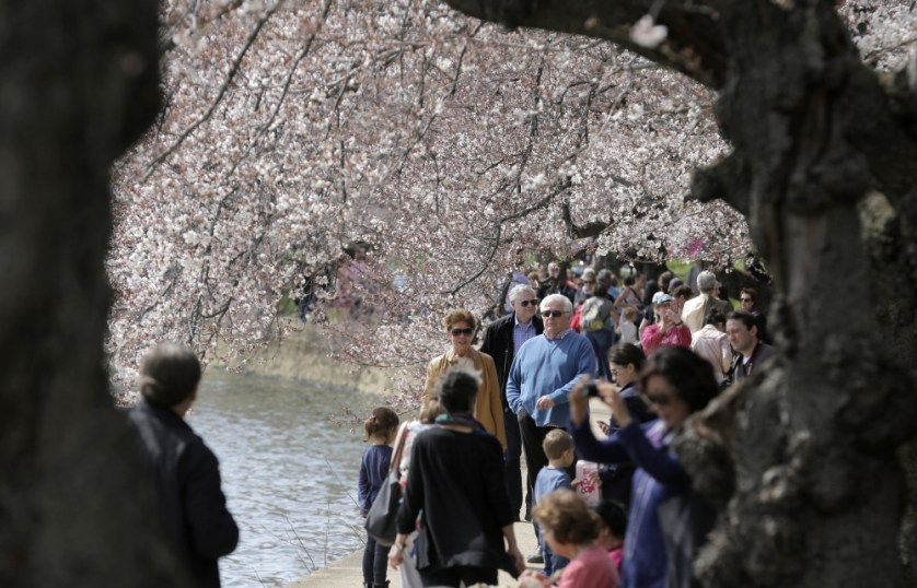 __WAS725_USA-DISTRICTOFCOLUMBIA-CHERRYBLOSSOMS_0323_11-1458766814_161
