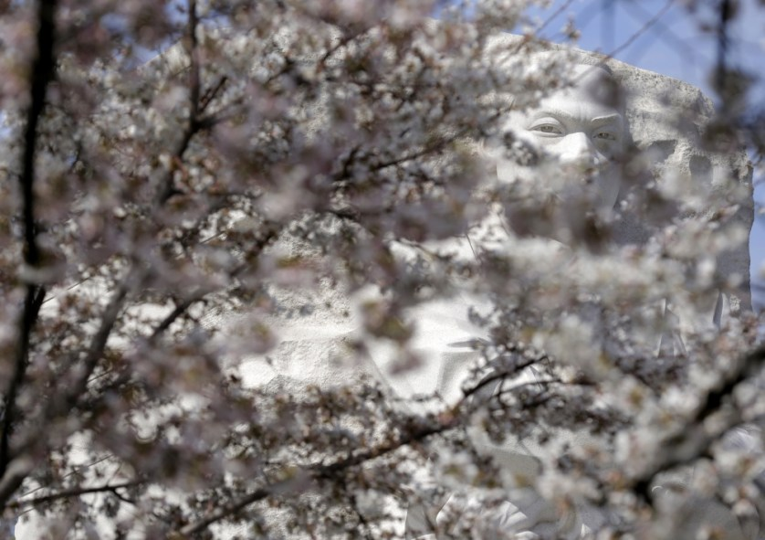 __WAS728_USA-DISTRICTOFCOLUMBIA-CHERRYBLOSSOMS_0323_11-1458766394_161